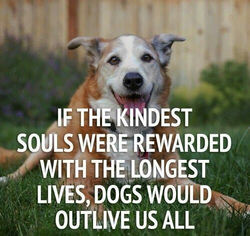 ''If the kindest sould were rewarded with the longest lives, dogs would outlive us all.''