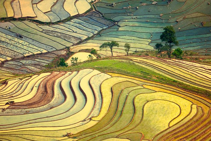 Golden Afternoon in Vietnam by Hai Thinh. Vietnam is the second largest exporter of rice, after Thailand. Evidence of rice farming in Vietnam dates to the Neolithic period. www.flickr.com