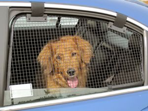 Coolest Invention EVER!!! Please share! Keep your puppy safe while driving and allow them to breath on a hot day!