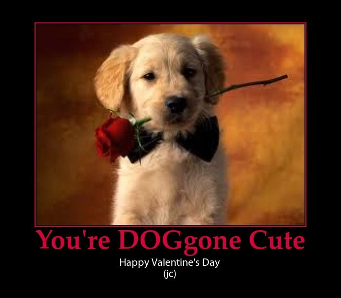 Puppy Valentine Cute Pun Holiday Ideas Pinterest Puppies Cute