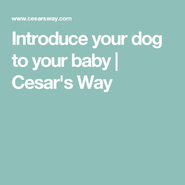 Introduce your dog to your baby | Cesar's Way