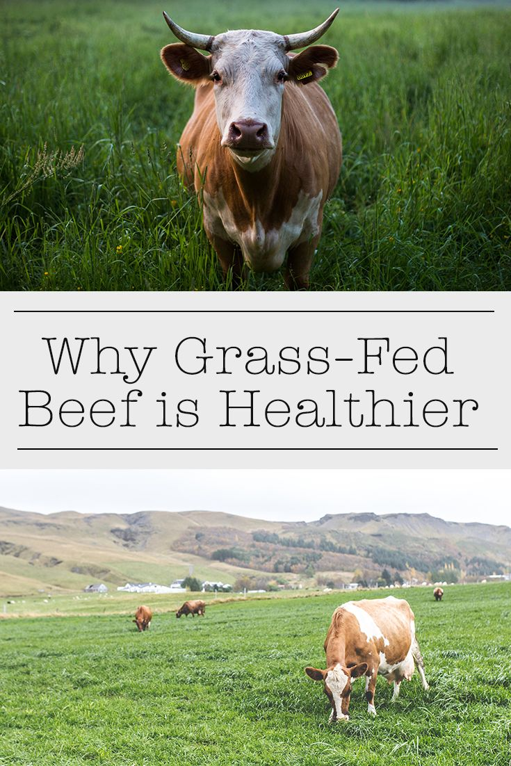 Grass-fed beef is much healthier than typical grain-fed beef. Here's why! [Health and nutrition]