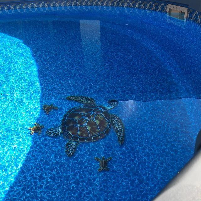 Brown Turtle Pool Mosaic Mosaic Pool Pool Paint Swimming
