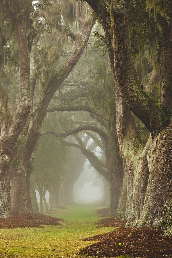 Magic Forest ~ historic Avenue of Oaks, St. Simons Island, Georgia by Barbara Marie Kraus