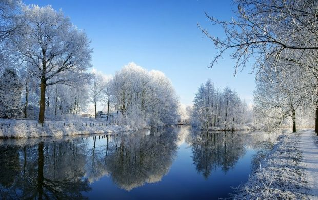 Winter trees along the river