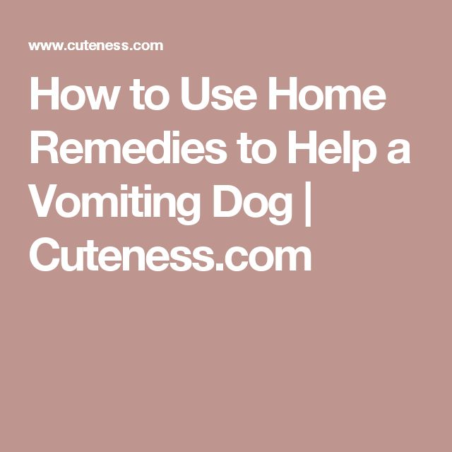 How to Use Home Remedies to Help a Vomiting Dog | Cuteness.com