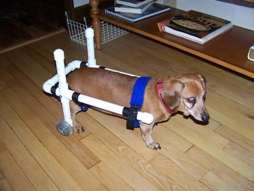 Dog Wheelchair Dachshund Wheelchairs Small Dog