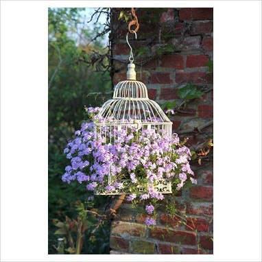 Phlox in an old bird cage