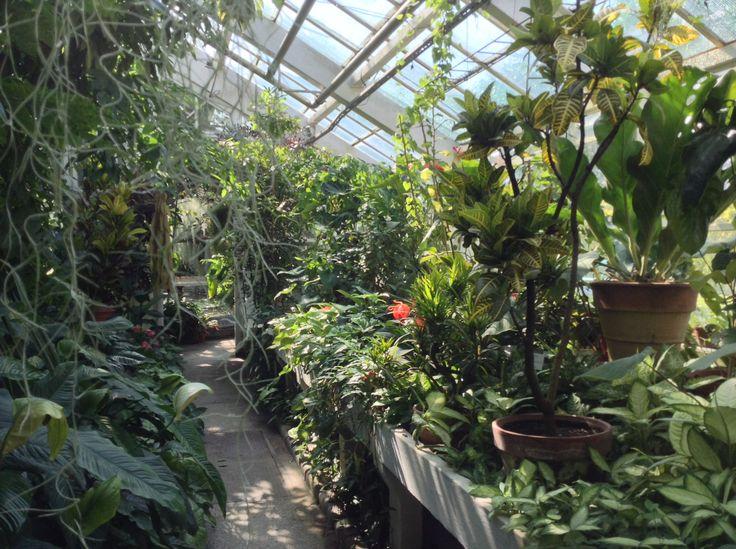 Giardino Botanico di Cracovia - Serra Tropicale, che sogno!