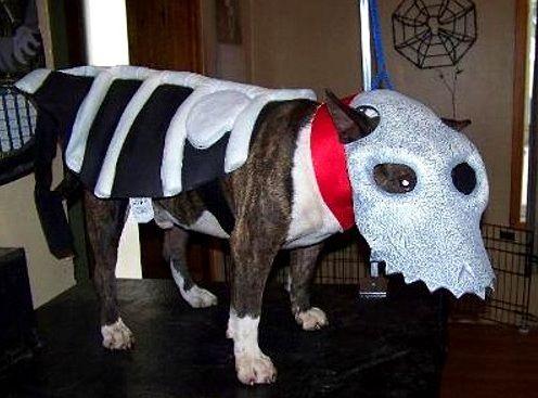 Halloween Monster Costumes