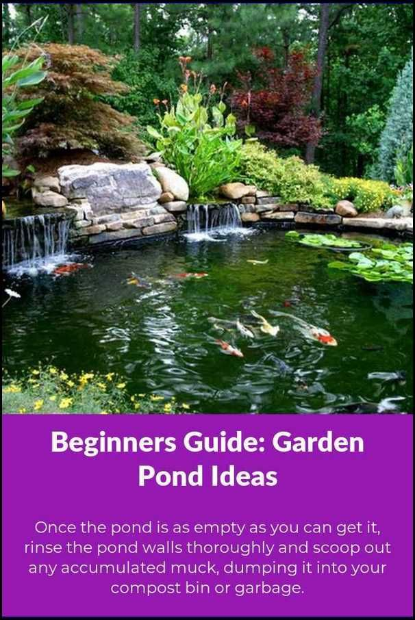 Steps To Make Your Pond Garden Grow With Minimal Effort