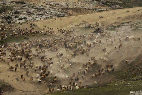 osCurve Magico: Los pastores kazajos asisten al rancho de Altái pa...