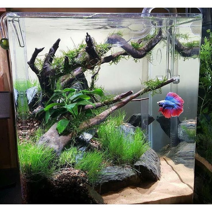 Aquascape with driftwood and rocks