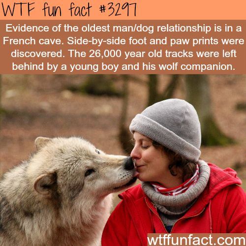 dog and human relationship facts about men