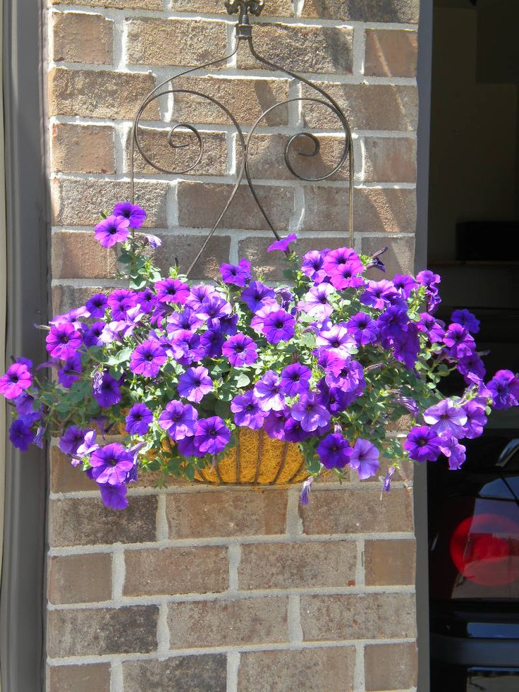 60 best images about hanging baskets on pinterest front porch railings flower ball and geraniums. Black Bedroom Furniture Sets. Home Design Ideas