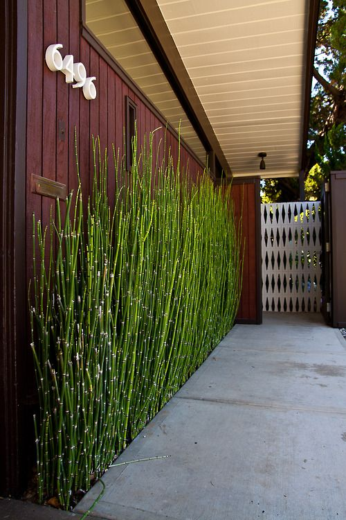 I just love horsetail plants. I might just do this at my house... love that bamboo re-pinned by http://www.wfpblogs.com/author/nicolerichards/ ♥´¯`•.¸¸.☆