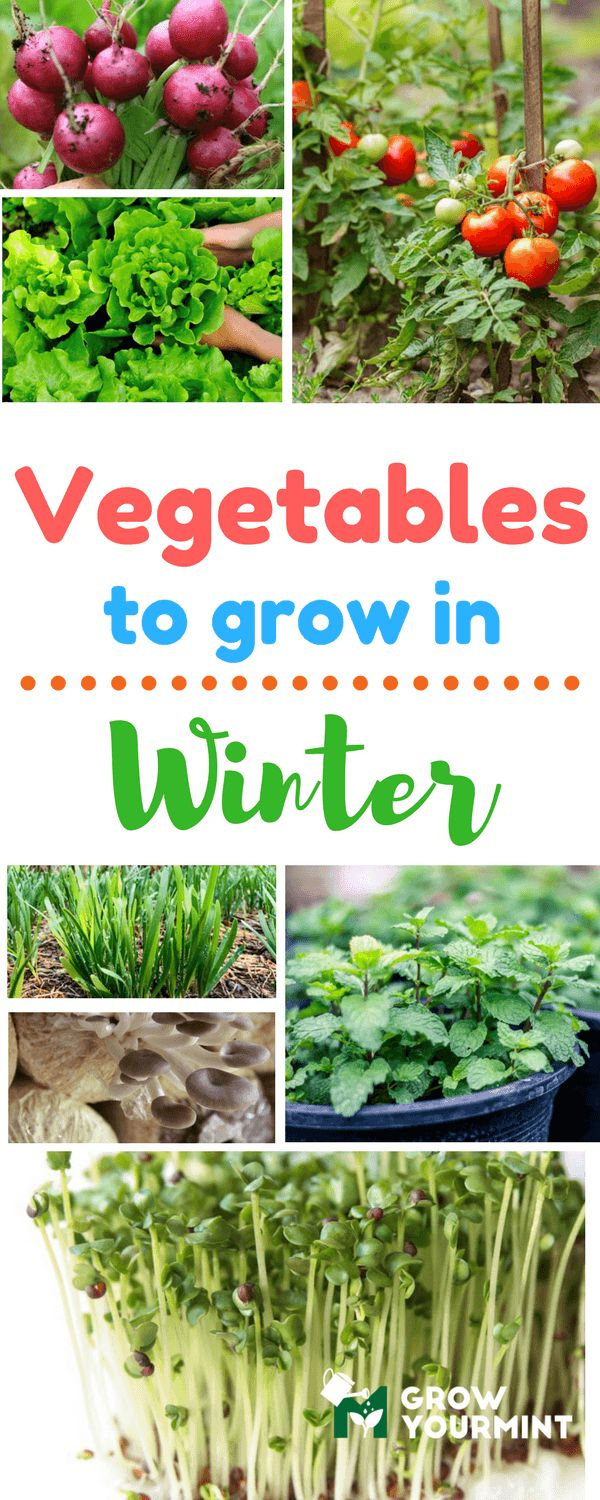 Some of the plants listed here have other beneficial attributes, but all of them are sharing a common goal, and that is to resist the winter depression. #vegetable#garden#gardening#growyourmint.com