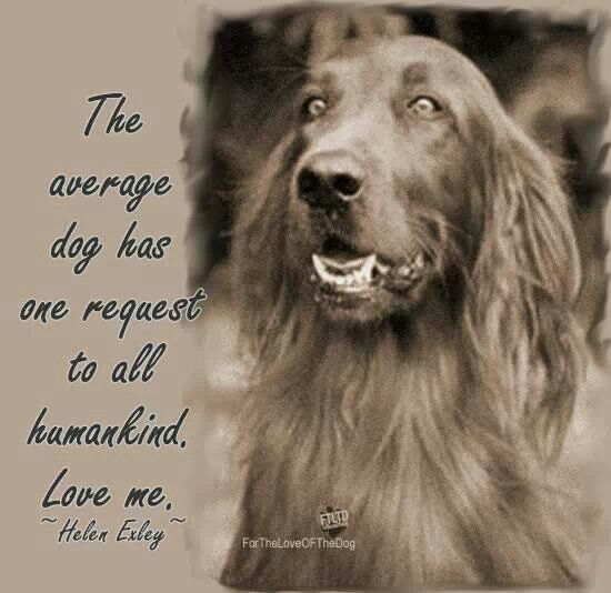198 best images about pet quotes and sayings on pinterest