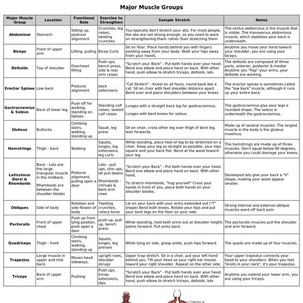 17+ images about Muscle groups on Pinterest