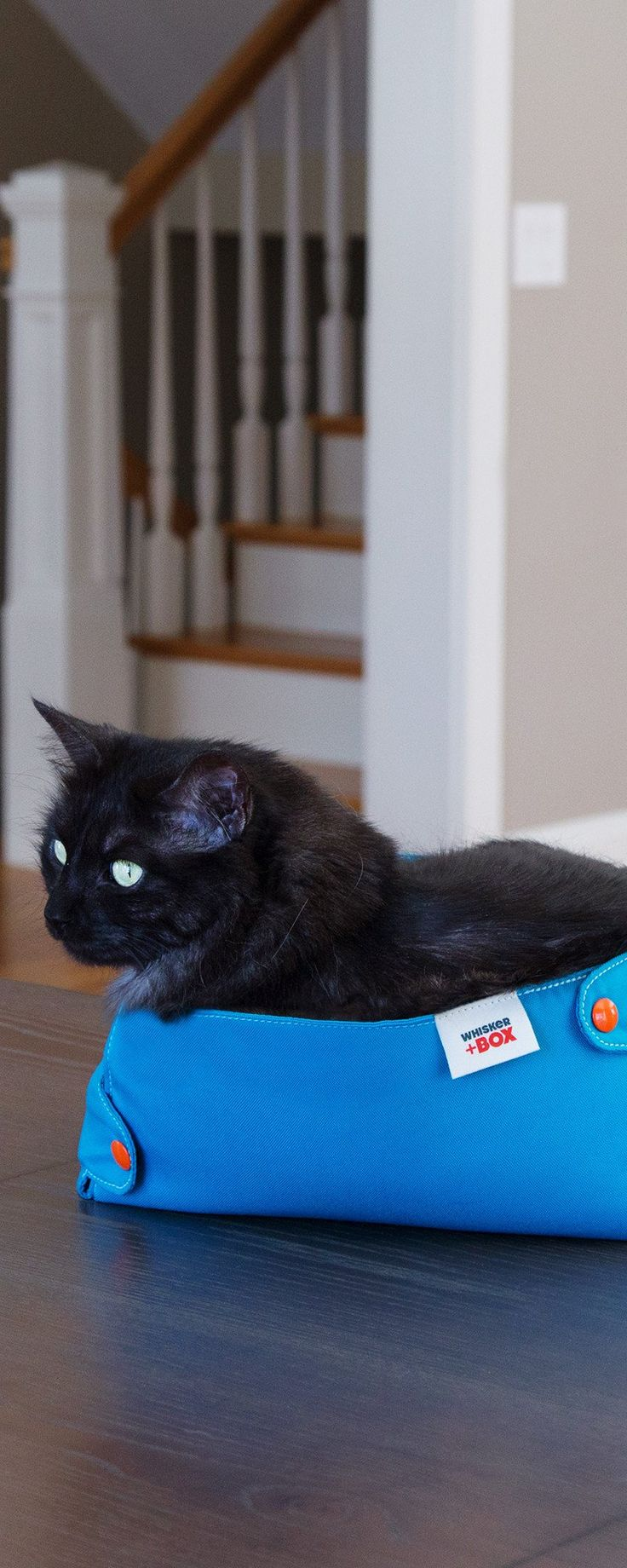 This cute box is like a collapsible cat bed, giving your kitty the compression therapy they love in a design that far outwits the tattered shoebox. It's designed to fold and store, and the durable nylon is extra easy to clean. Cats love squeezing into these, and you'll love supporting something Made in the USA.