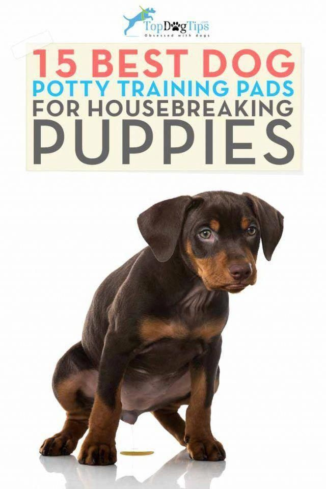 Too Much Barking Roaring Wild Behavior As Well As Other Unfavorable Traits That A Pet Dog May Have Can In 2020 Potty Training Puppy Dog Pee Pads Dog Potty Training