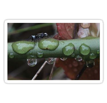 Ant and Raindrops Sticker by StickerNuts