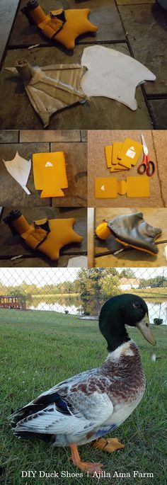 Chestnut's Duck Shoe: We had a duck with an injured leg from a raccoon attack that then got a bumblefoot infection from hopping around the yard on one foot. Made a little bootie from a neoprene beer coozie and scrap vinyl to keep his foot wound clean when he was free ranging in the yard. The shoe comes off when not needed so the wound can breathe. I traced his foot on paper and made a cardboard foot so I didn't have to bother him for fittings.
