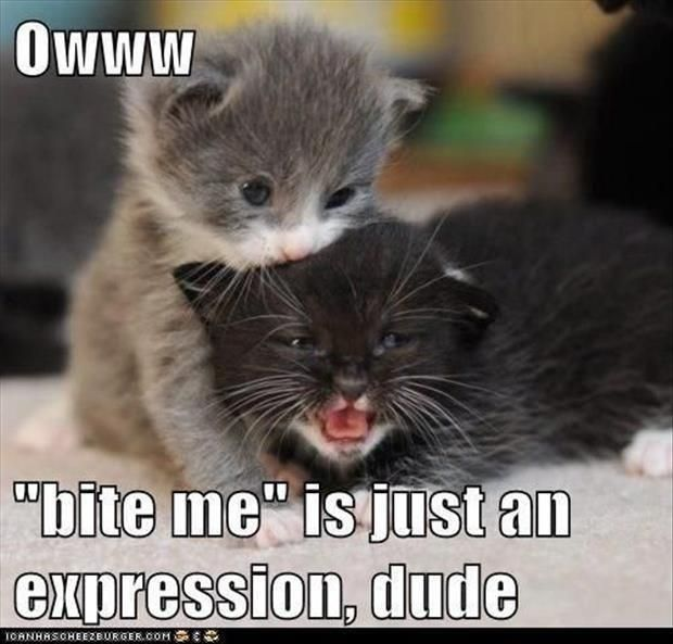 So cute in case you needed a smile – cute baby animals funny sayings #funnyanimalswithcaptions