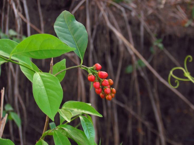 green and red, plants, seeds