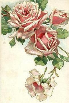 The Roses bloom in June -- vintage postcard.