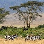 [タンザニア]セレンゲティ国立公園