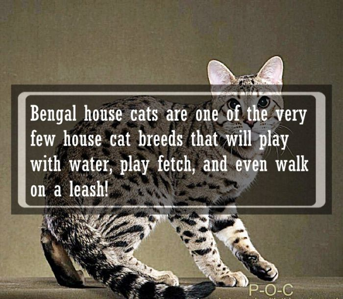 Animal Facts (24 pics)