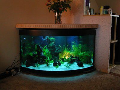 Best 25 corner aquarium ideas on pinterest vivarium for Fish tank fireplace