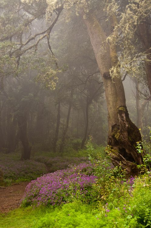 A misty trail leading into the woods. What would be to others creepy, holds a great deal of attraction for me. Just give me an emergency torch and I'm off for the day :) La Gomera, Canary Islands - Spain