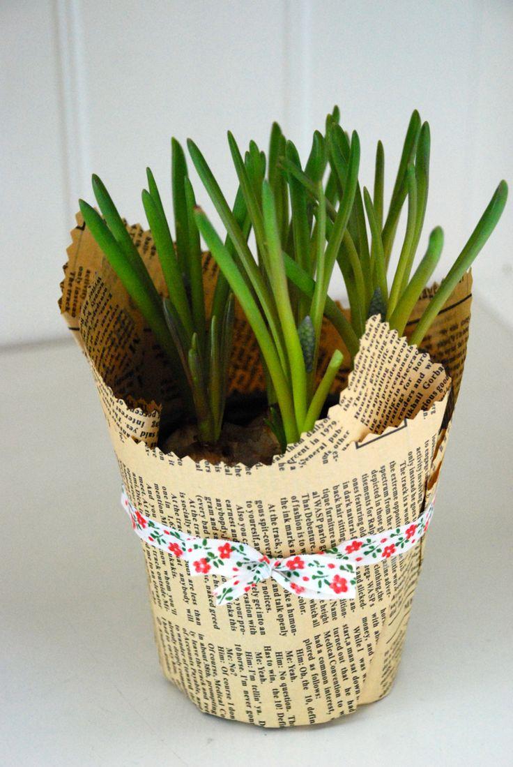 Plant favors, spring bulbs, pot wrapping, wedding favors, plants wedding, spring flower, beautiful pot, marriage Plante marturii nunta, bulbi primavara, seminte martturii, bulbi marturii