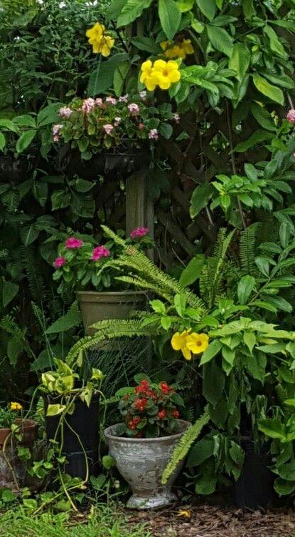 Looks like a secret garden.