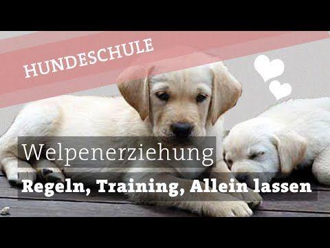 Welpenerziehung - Training, Erziehung, Regeln und das Allein lassen - Hundeerziehung - YouTube