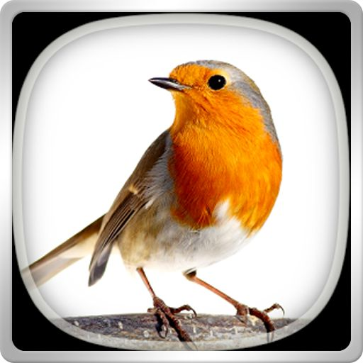 BIRD CALLS SOUNDS RINGTONES – NHỮNG ÂM THANH DIỆU KỲ >>> http://cleverstore.vn/ung-dung/bird-calls-sounds-ringtones-103070.html Enjoy the sounds of nature! Feel like you are in the woods far away from the noise from the cities. Get Bird Calls, Sounds & Ringtones app for your android phone or tablet and listen to the best animal sounds. This app is both fun and educational, because you can learn how to discern the sounds of each kind of bird. Set some of them as a ringtone, notification sound…