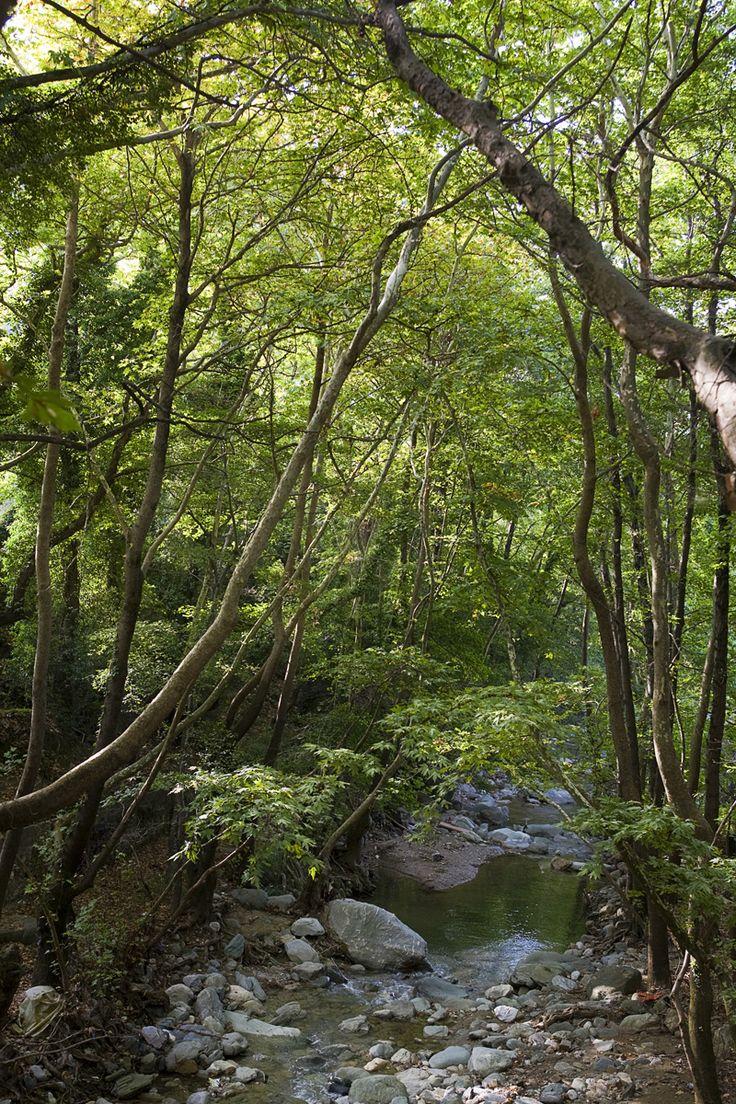 Either you like #mountain or #sea, #Pelio has it all! http://www.tresorhotels.com/en/regions/greece/thessalia/pilion/