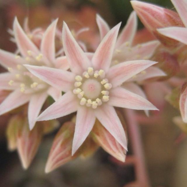 Inattese fioriture