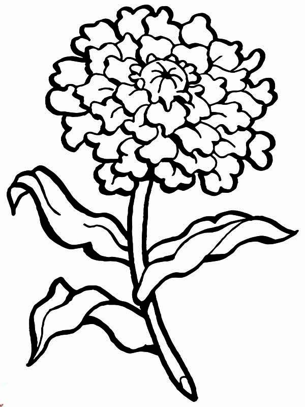 Carnation Flower Carnation Flower For Mothers Day Coloring Page