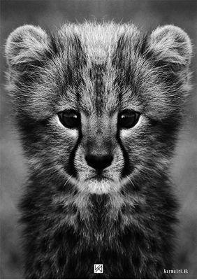 Billede af Baby Gepard illustration - Acinonyx jubatus