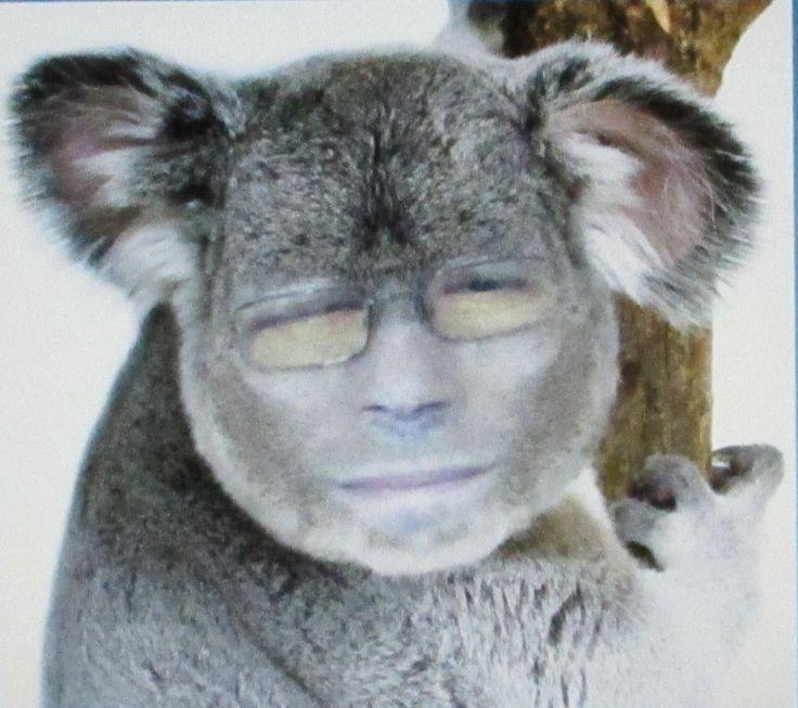 Jokke koala