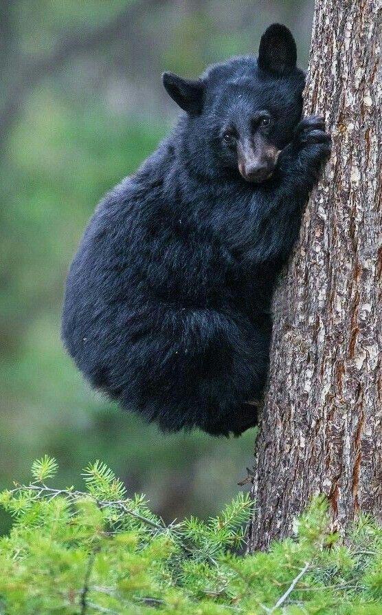 Sweet Little Black Bear!