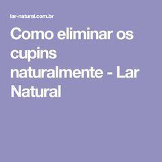 Como eliminar os cupins naturalmente - Lar Natural