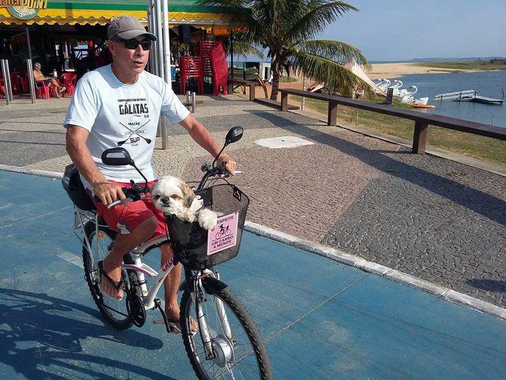 Instagram picutre by @ebikecia: Olha só a Mel toda folgada na cestinha fazendo um Test Ride com seu dono na nossa e-bike Caloi 100 customizada. :) #ebike  Agende você também um Test Ride: WhatsApp 22-99853-9470 - Shop E-Bikes at ElectricBikeCity.com (Use coupon PINTEREST for 10% off!)