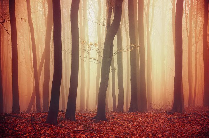 "Misty autumn forest canvas photo print - nature wall art - ""If These Trees Could Talk LVII."" by Zsolt Zsigmond (realityDream) - SKU0033"
