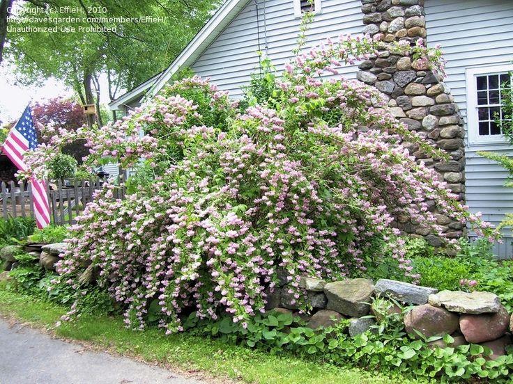 fall blooming flowers virginia