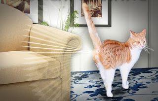 SOS Animal  com amor: Aprenda como limpar urina de gato