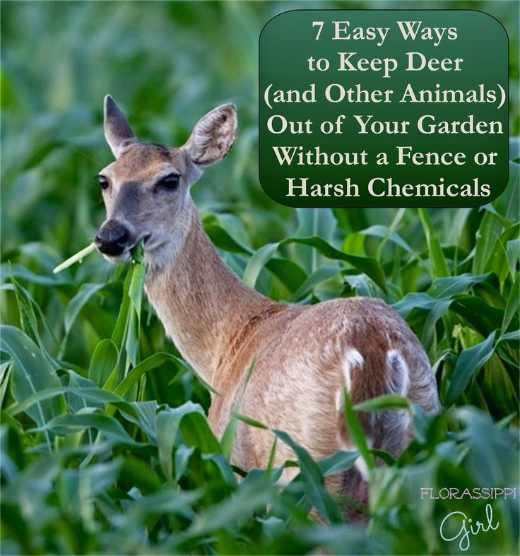 florassippi girl 7 easy ways to keep deer and other animals out of - Garden Ideas To Keep Animals Out